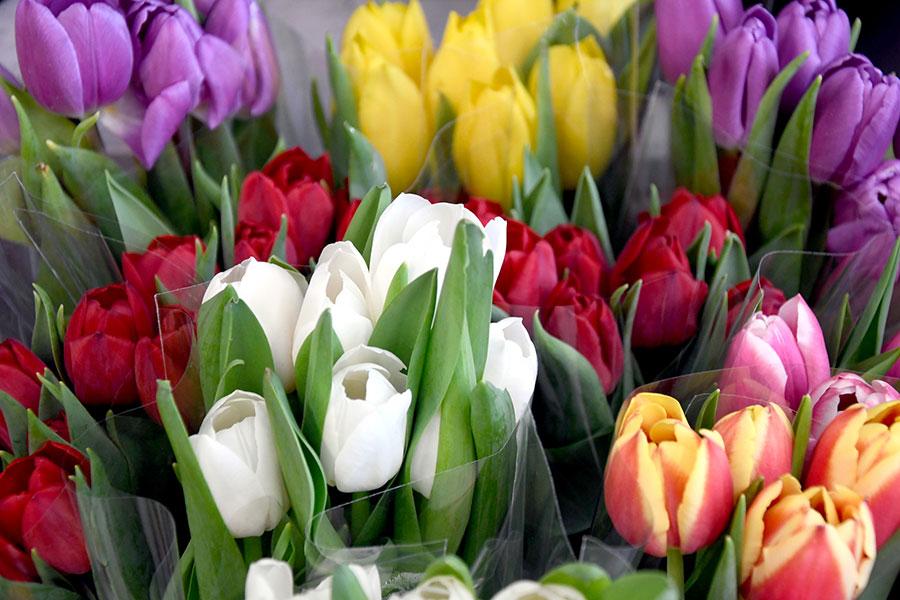 Frische Schnittblumen bei EDEKA